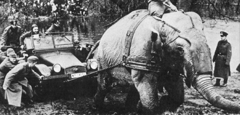 http://www.radioscanner.ru/uploader/2009/elephant.jpg